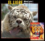 ligre7ry.jpg